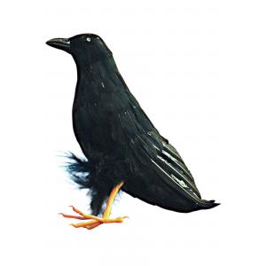 """10"""" Raven Prop"""