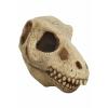 Skull T-Rex Mask