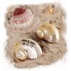 Personalized Turban Shimmering Seashells
