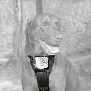 Image of Kurgo Camera Mount Dog Harness
