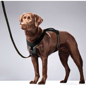 Image of Kurgo Go-Tech Adventure Harness